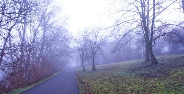 Walk to Work, trees in fog