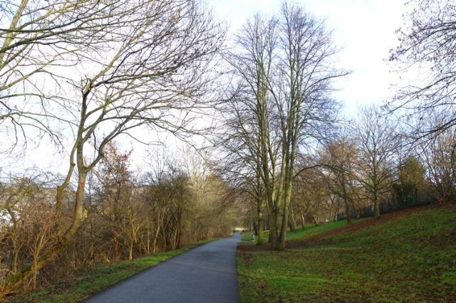 Jena, Germany, Trail, trees