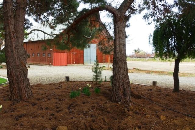Tarragon, Resting place, pet burial, Barn Cat, Grove of trees