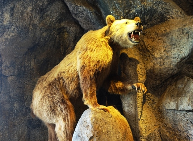 Grizzly Bear, Bass Pro Shops, Manteca