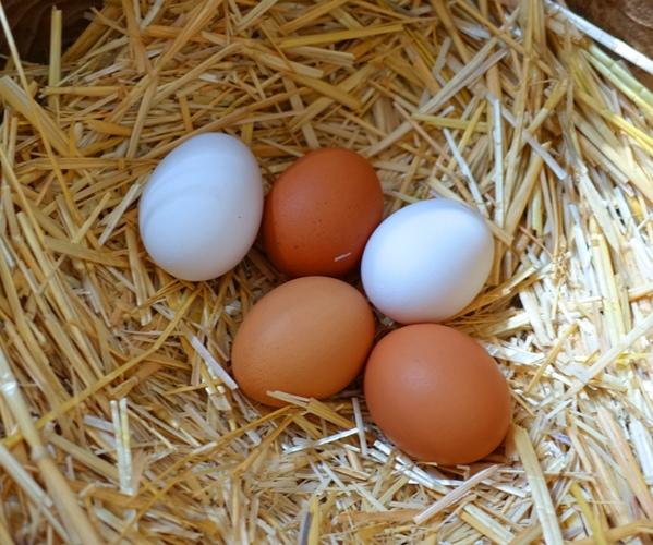 Farm Fresh Eggs, Brown Eggs, Country Eggs, Chickens