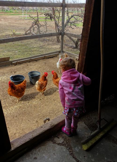 Chicken Coop, Farm, Farmyard, Country Living