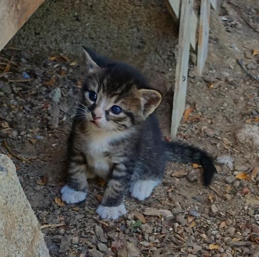 Runt, Kitten, smallest kitten