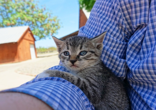 Barn Kitten, little kitten, relaxing kitten