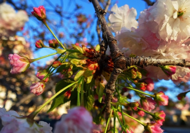 blossoms, trees, spring blossoms