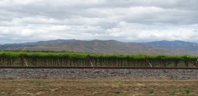 Vineyard, California, Central Valley, Hills