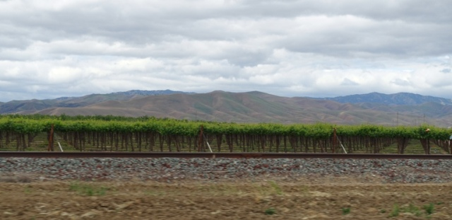 Vineyard, California, Central Valley, Hills