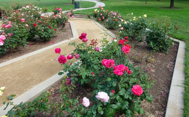 Rose Garden, Tracy, California, Tracy Garden Club