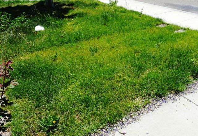 Yard work, mowing, tall grass, Saturday chores