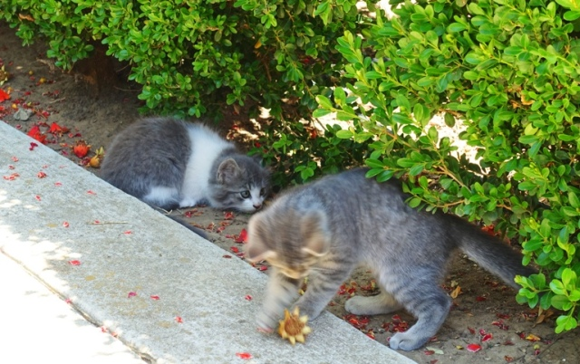 orchard kittens, cats, playful cats, country cats