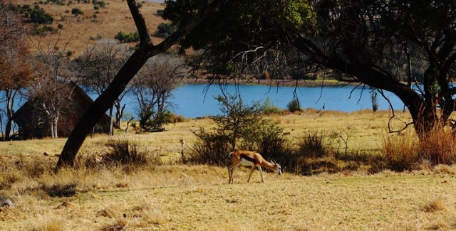 Springbok, South Africa, Cradle Moon, Conservancy