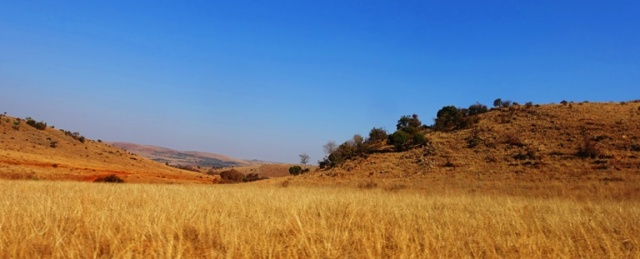 South Africa, Johannesburg, Country, Veld
