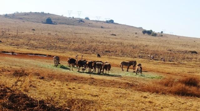 Zebras, Ostrich, Animal Park, South Africa