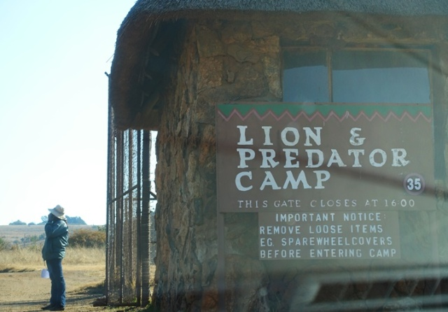 Lion Camp, Lion preserve, South Africa