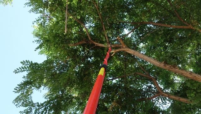 Tree saw, tree trimming, wayward branch