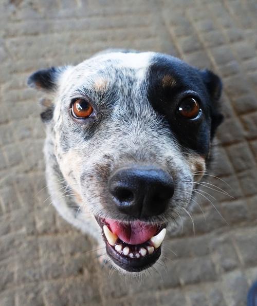 Dog, welcome, orchard dog, barnyard dog