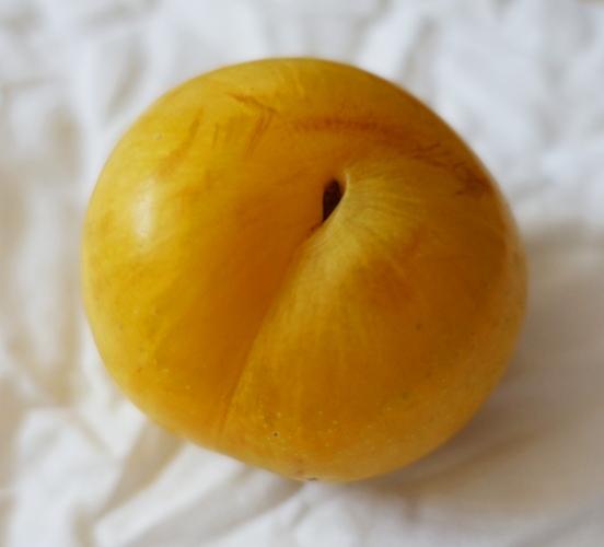 Plum, Apricot, fruit, variety