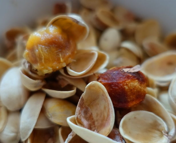 organic waste, pluot stone, pistacio shells
