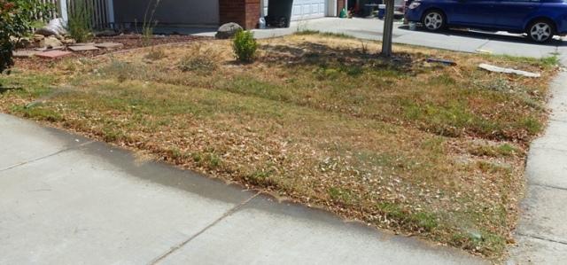 Yard work, dead lawn, mowing, no water