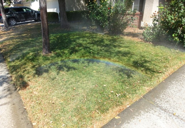 Front Yard with sprinkler, green grass, rainbow from sprinkler