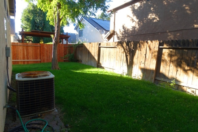 Back Yard, pre mow, tall grass
