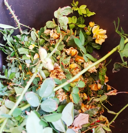 Yard Waste, Rose Waste, yard Work, Rose clippings