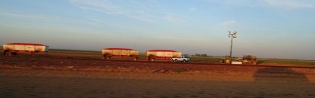 Tomato harvest, bins, trailers, lights