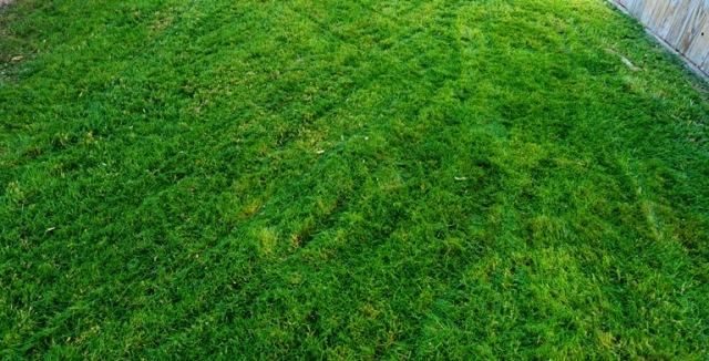 Freshly Mown Yard, Grass, High on Grass