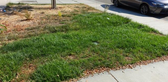 Overgrown Lawn, autumn yard work