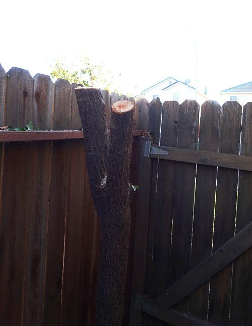 Tree Trunk, cutting back tree, yard work