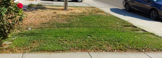 Mown Yard, Fall Yard Work, Neighbors Yard, Good Deed