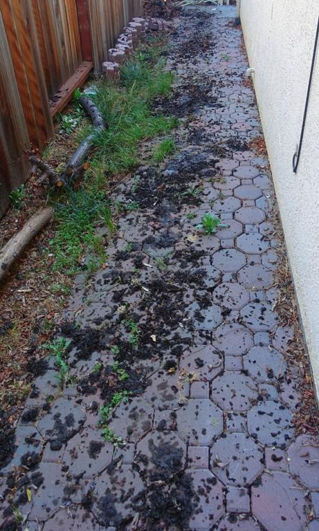 Gutter leavings, leaves, sidewalk