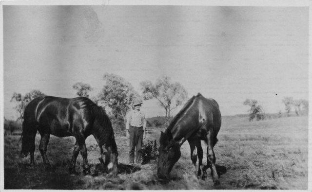 Star and Minnie, Horses, Chub Van Duzor, Great Grandfather