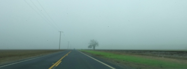 Foggy Drive, Central Valley, California, Foggy Day