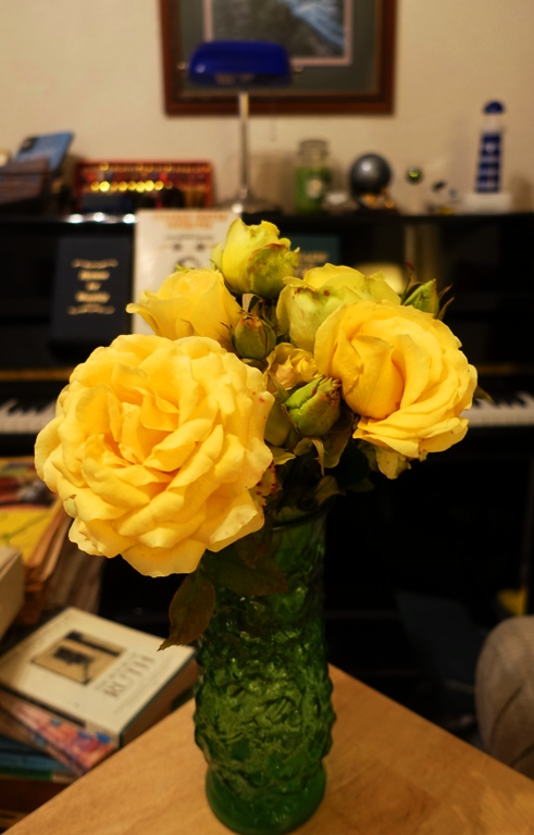 Yellow Roses, Vase, Last Roses of the year