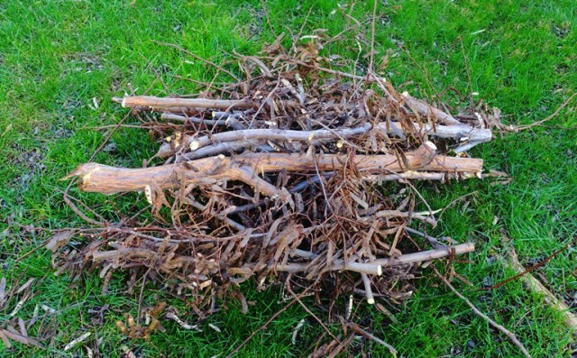 tree limbs, tree cutting, tree trimming, limb pile, yard work