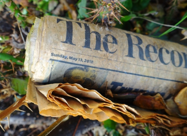 Misdelivered newspaper, pruning surprise, rose pruning