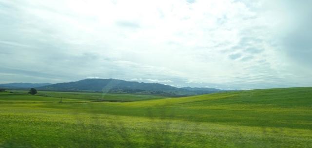 Rolling hills, rainy season, north bay, San Francisco
