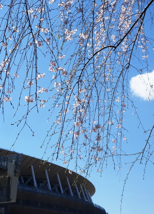 Tokyo New National Stadium, Cherry blossoms, Spring in Tokyo