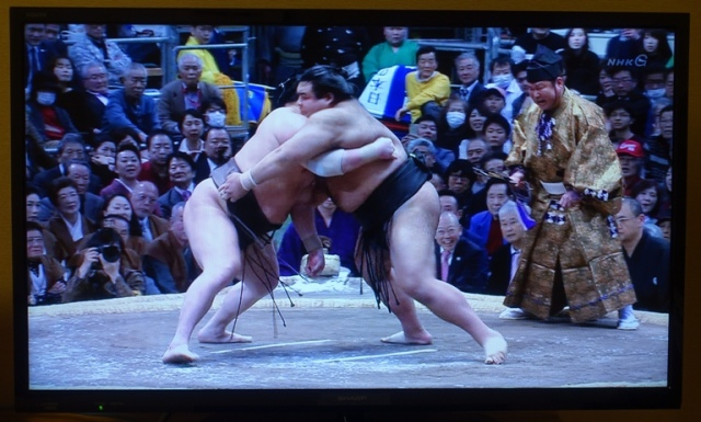 grappling, sumo wrestling, sumo, Japan