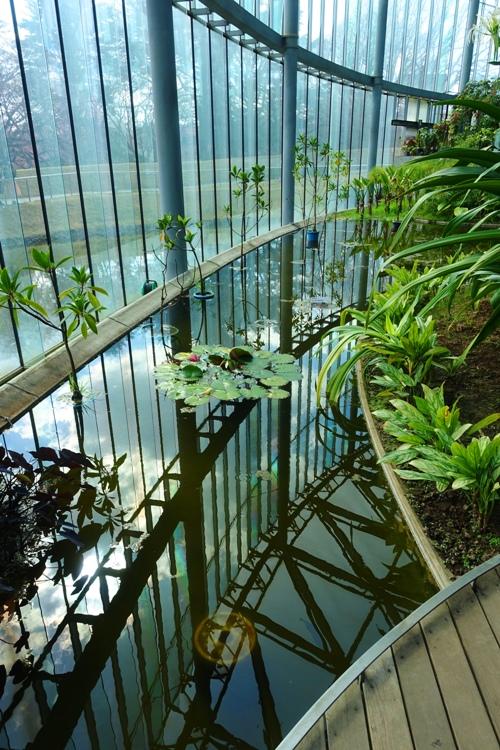 greenhouse, plants, water, shinjuku gyoen, horticulture