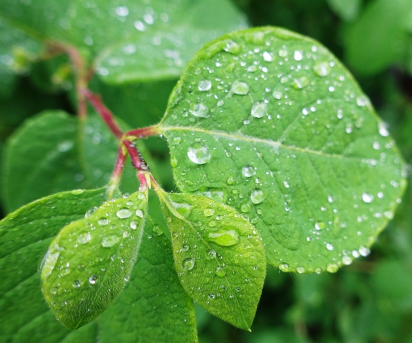 raindrops, leaves, walk in rain