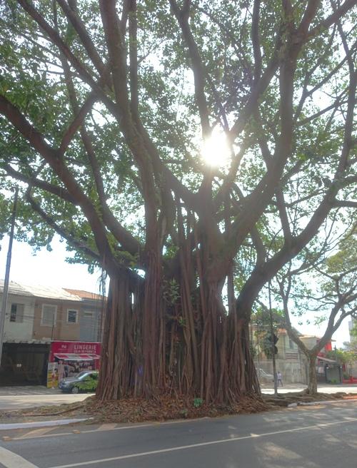 sao Paulo Brazil tree street sun