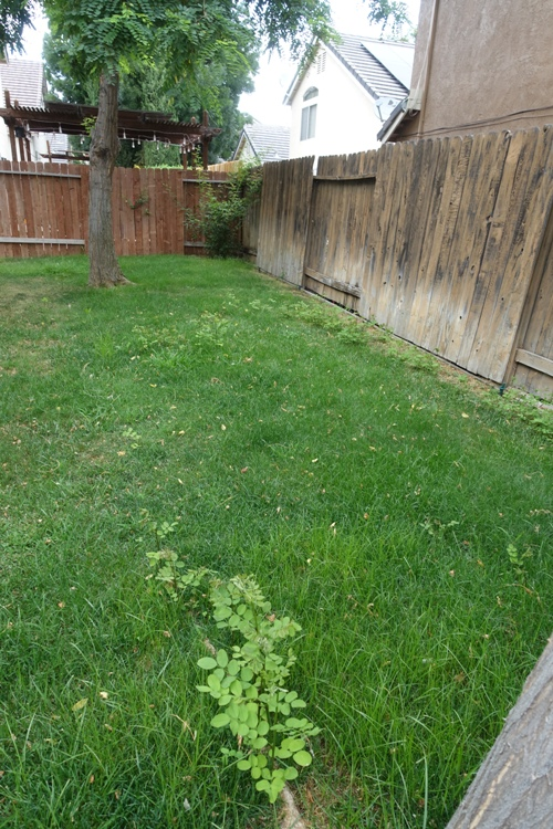 small trees, back yard, mowing