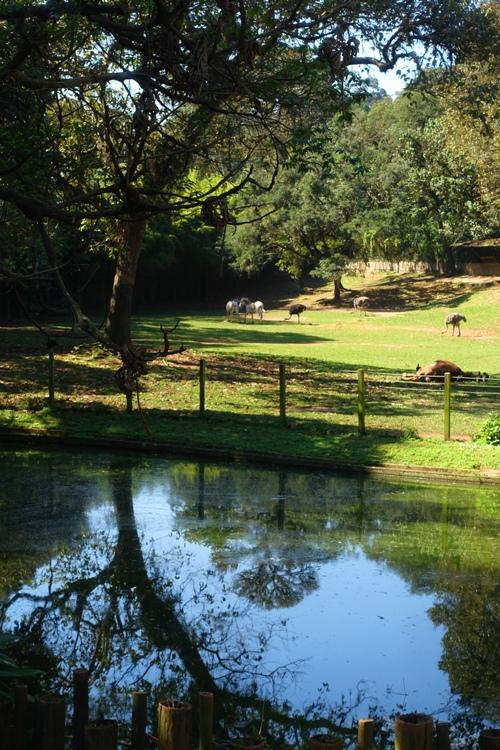 zoo view, sao paulo zoo, zebra, camel, ostrich, pond