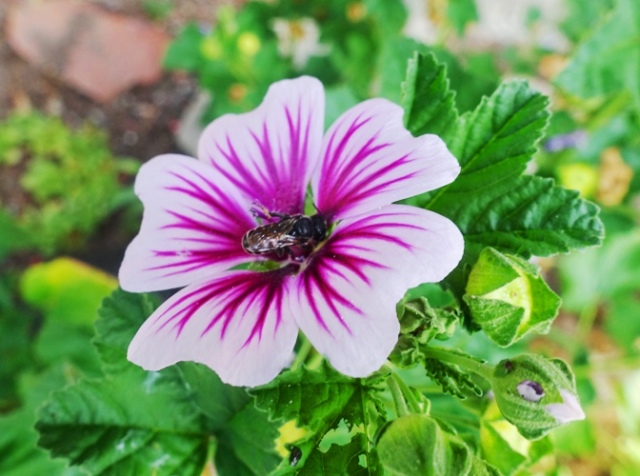 bee, flower, flowers, fall, flora and fauna