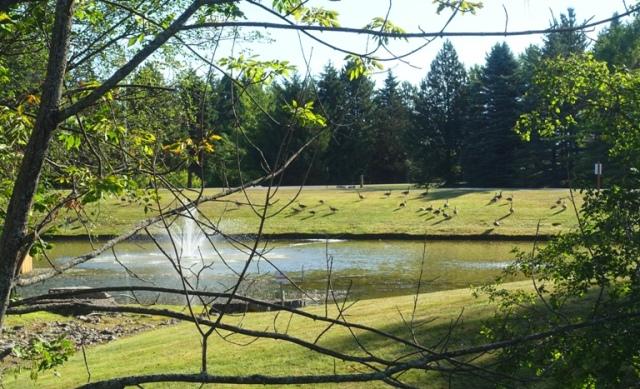 Kingbridge Centre, Pond, Canadian Goose, fountain