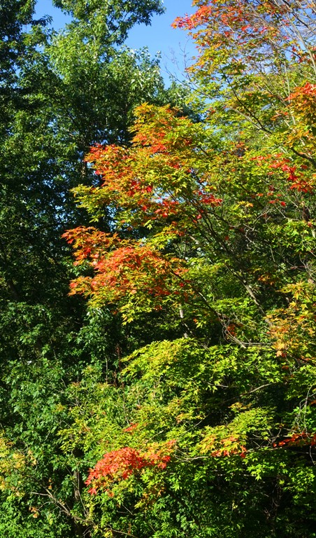 Fall Color, Canada, Red Leaves