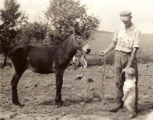 Grandpa, Mule, Farming, Iowa