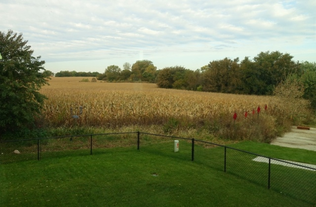 Iowa cornfield, ready for harvest, Iowa, corn, tall corn state